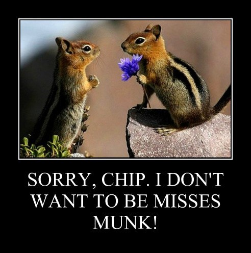 chipmunks proposal flowers love denied
