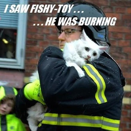Sad toys fire Cats