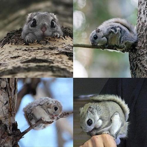 squirrel cute tree - 8063825664