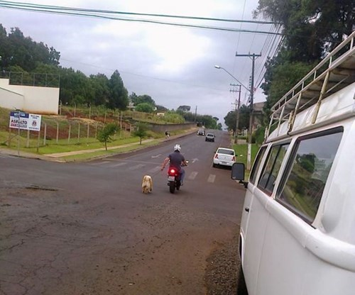 dogs lazy walking motorcycle funny