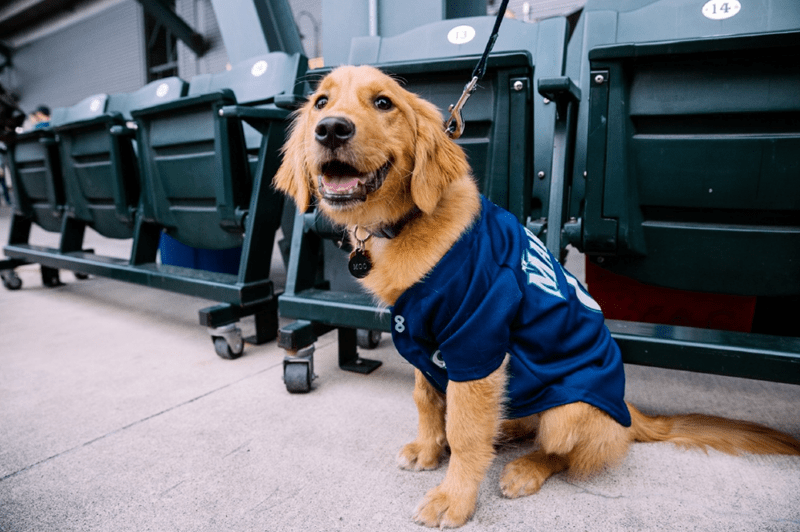dogs seattle mariners baseball cute MLB - 806661