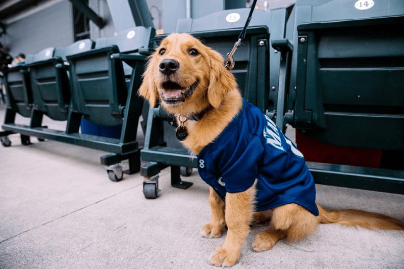 dogs seattle mariners baseball cute MLB - 806661