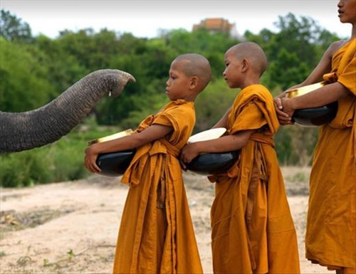 smell,elephant,cute,monks