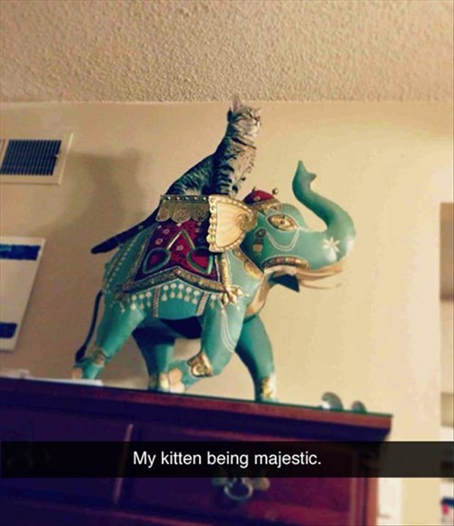 majestic Cats funny - 8066951424
