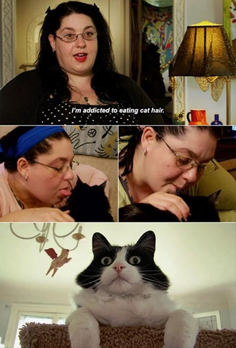 crazy cat lady,Cats,weird