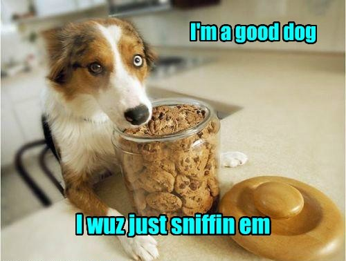 good dog,dogs,cute,noms