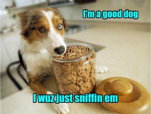 good dog cute noms - 8066985984