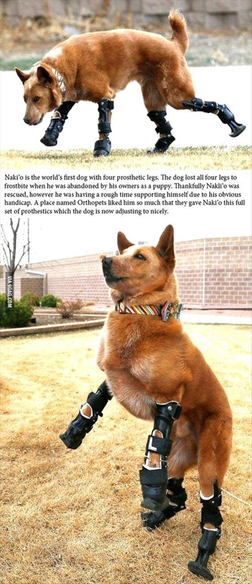 dogs,prosthetic,amazing,rescued