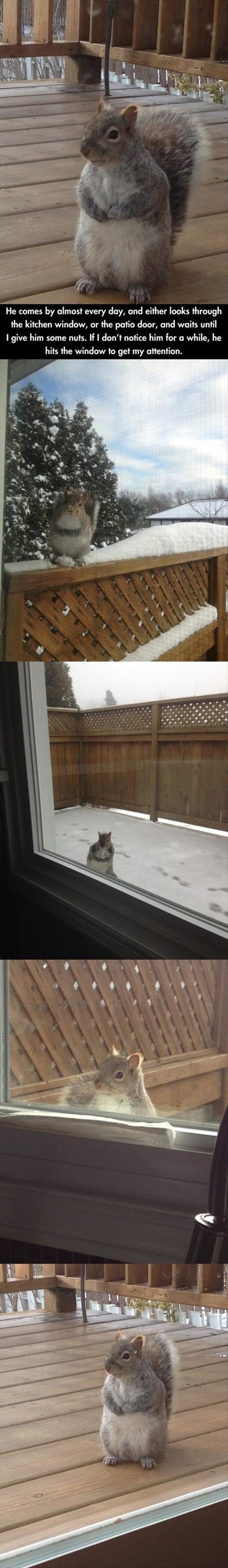cute squirrels noms funny - 8067034112
