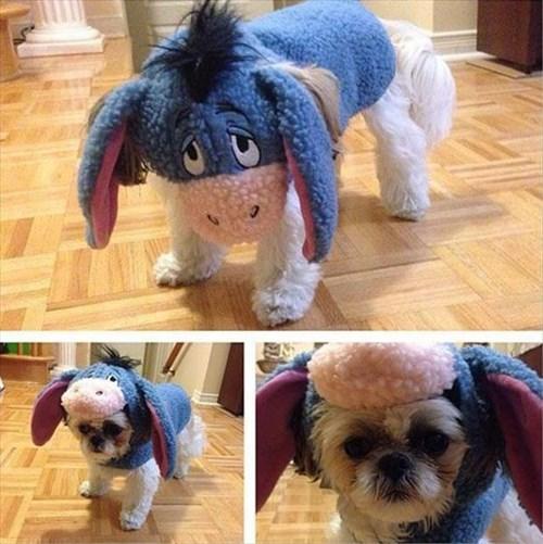 halloween costumes,dogs,eeyore,funny