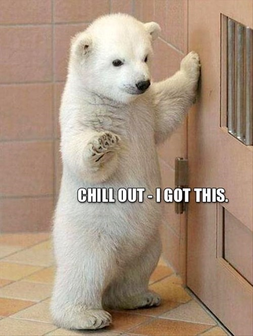 polar bears cute cubs chill out - 8067068928