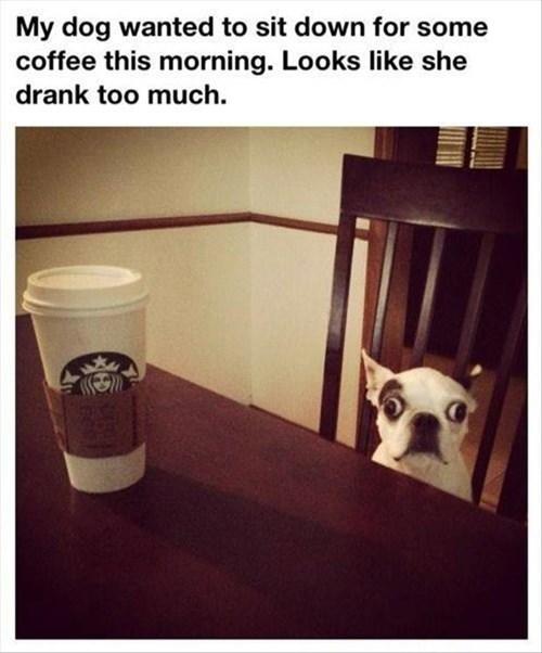 dogs caffeine coffee funny - 8067077376