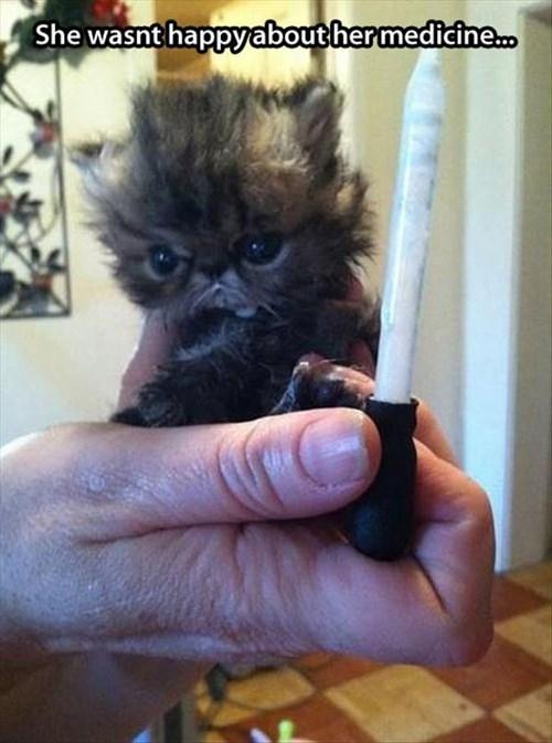 kitten,medicine,Cats