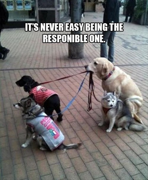dogs leash responsible cute funny - 8067098880