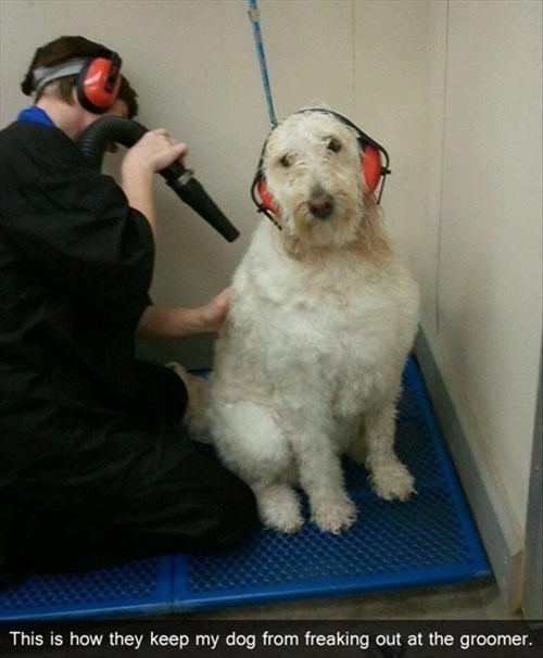 dogs grooming cute hearing