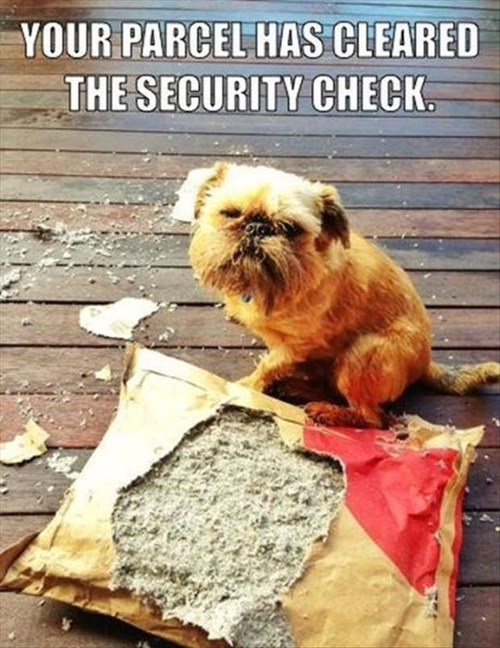 dogs packages destroy delivery - 8067126528