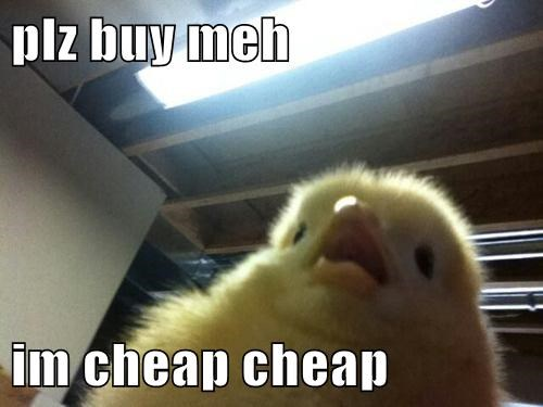 chicks buy puns chickens - 8067145216