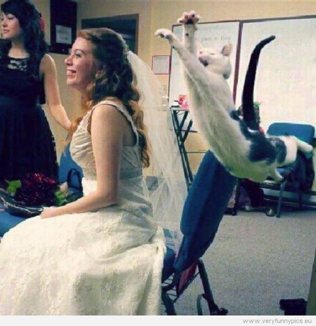 weddings - 8067333