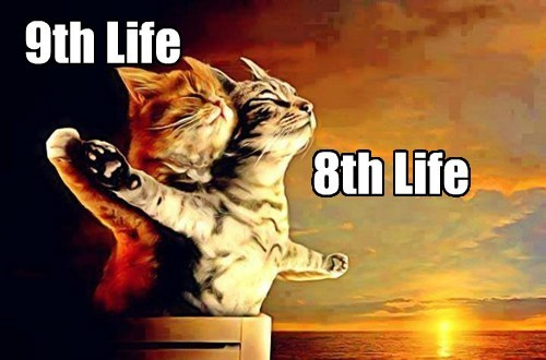 9th Life 8th Life