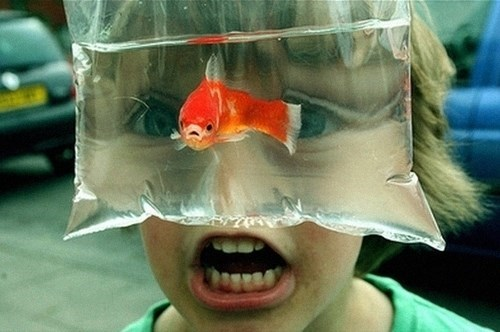 goldfish,kids,parenting