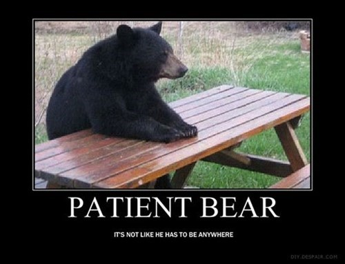patient bear funny animals