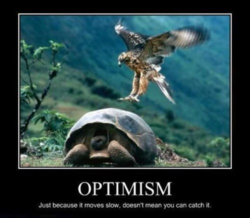 optimism birds turtle funny animals
