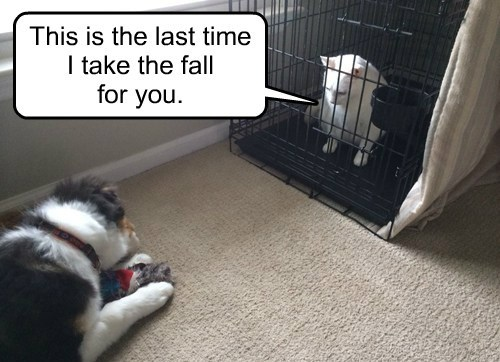 Cats busted dogs crate time out - 8068748544