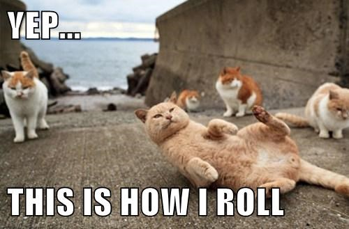 beach roll over Cats funny - 8068879104
