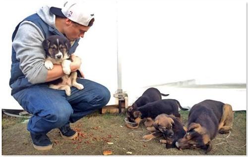 cute rescue puppies russia Sochi 2014 - 8068978432