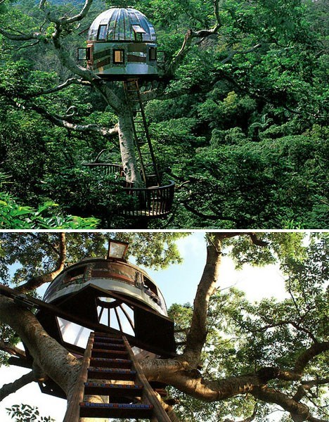 Connect With the Stars in This Tree House