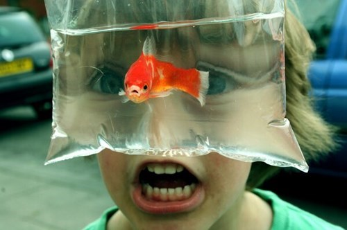cute fish kids pets - 8069100288