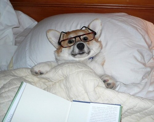 cute bed dogs reading