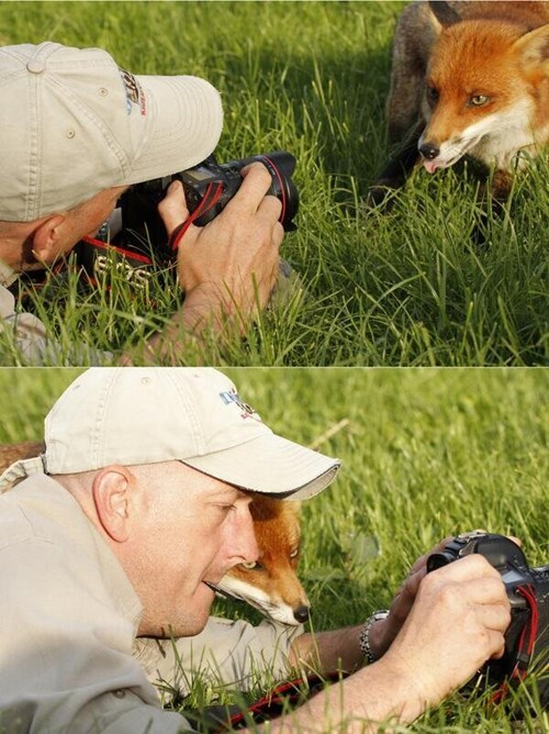 camera cute foxes funny Photo - 8069150720