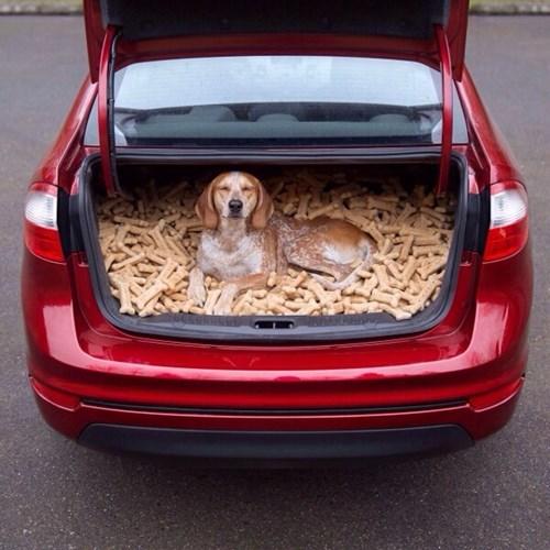 dogs treats cute trunks - 8069187072