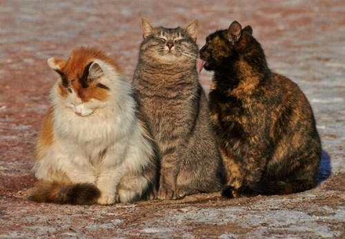 trio,friends,cute,Cats