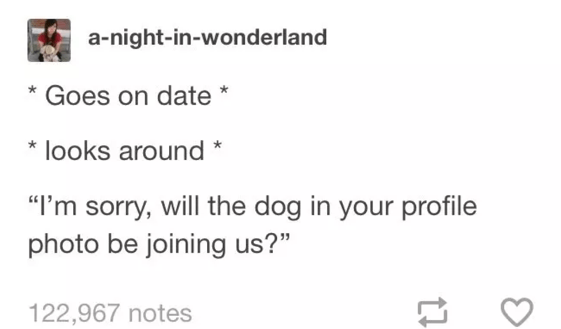 hilarious tumblr posts for people who are obsessed with animals