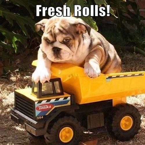 rolls dogs toys puns cute - 8069736960