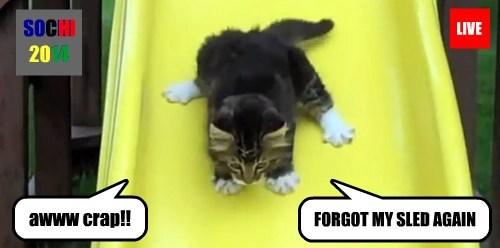 kitten skeleton Sochi 2014 cute Cats - 8069995520