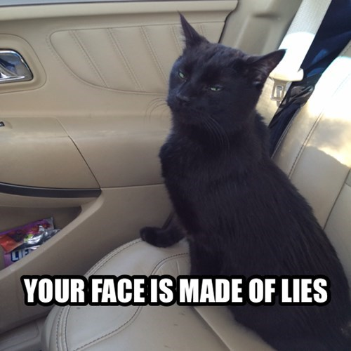 wtf suspicious Cats funny