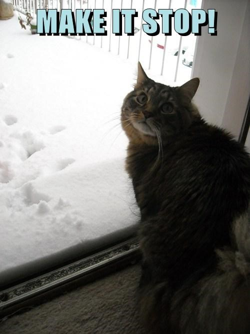 snow cold winter Cats - 8070526464
