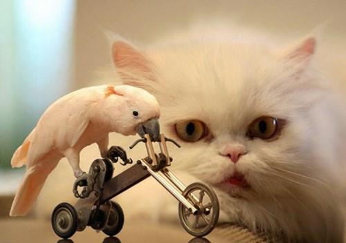 birds talent bikes Cats funny - 8070592768