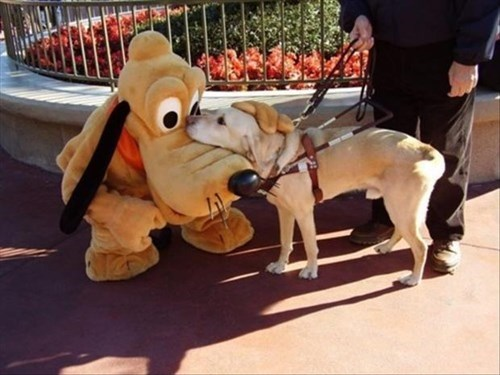 hero dogs cute goofy disneyland