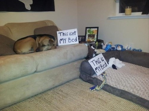 dogs,bed,rebel,paper signs,funny