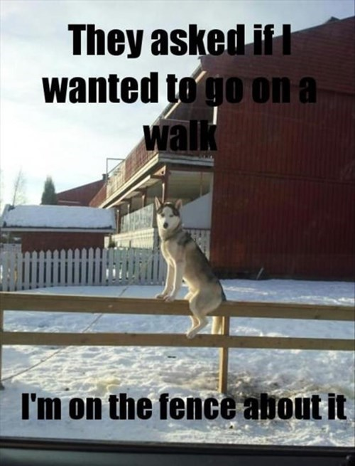 dogs,snow,puns,walk,funny