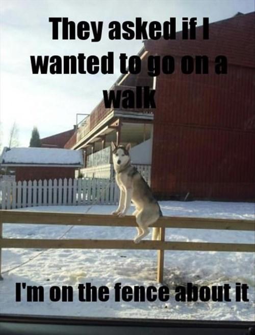 dogs snow puns walk funny - 8070936832