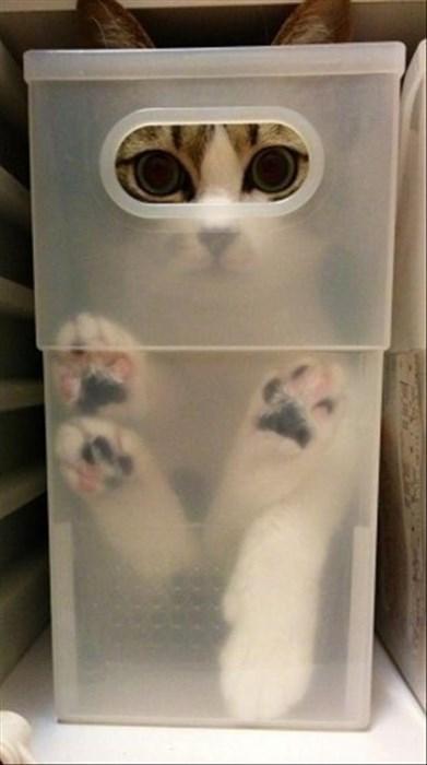 box spy if i fits i sits Cats funny - 8070964480
