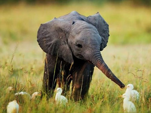 Babies birds cute elephants - 8071025664