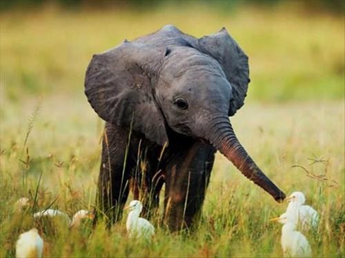 Babies birds cute elephants - 8071025664