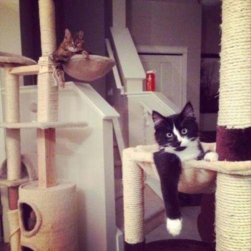 Like a Boss cat tree rule Cats - 8071026432