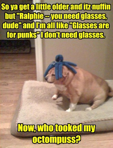 blind,dogs,glasses,toys